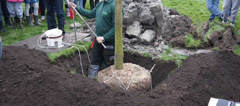 Biome Bioplastics Supports Tree Planting in Europe