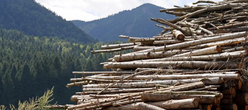 Biome Bioplastics to present at UK-Norway symposium on valorising woody biomass