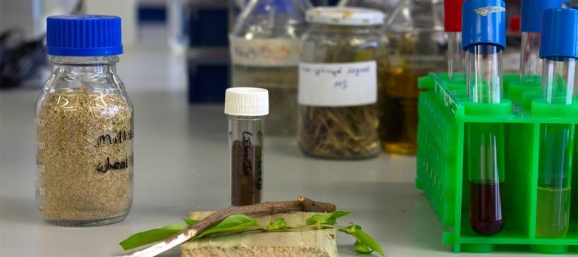 Research confirms next generation bioplastics could be made from trees